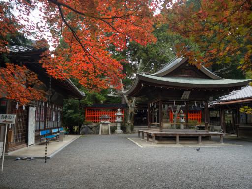 紅葉 三宅八幡宮(京都市左京区)