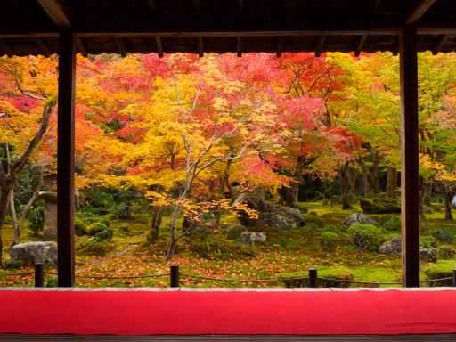 紅葉 圓光寺(京都市左京区)