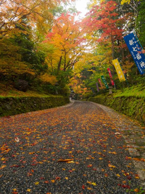 紅葉 赤山禅院(京都市左京区)