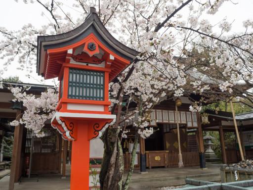 桜 車折神社(京都市右京区)