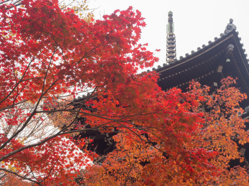 紅葉 真正極楽寺 真如堂(京都市左京区)