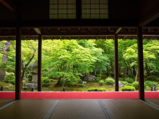 新緑 圓光寺(京都市左京区)