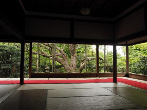 新緑 宝泉院(京都市左京区大原)