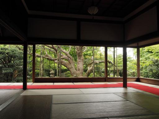 宝泉院(京都市左京区)