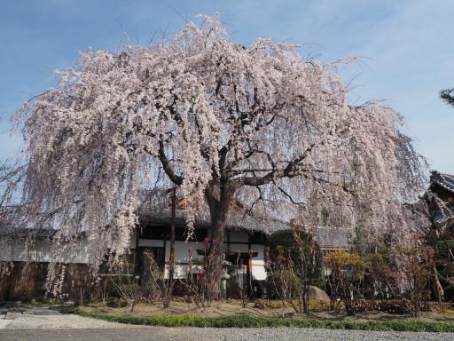 本満寺(京都市上京区)